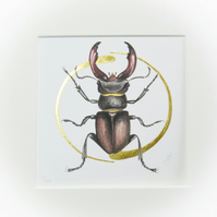 Illuminated stag beetle fine art print with real gold swirls.