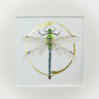 Illuminated giclee print of an Emperor Dragonfly with gold embelishment.