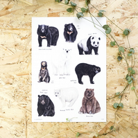 Bears of the World Watercolour A4 Print Painting Art Print of Bears Polar