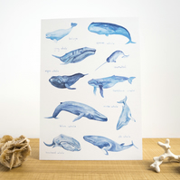 Whales of the World Watercolour A3 Print Painting Art Print of Whales