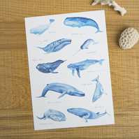 Whales of the World Watercolour A4 Print Painting Art Print of Whales