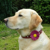 Dog Collar Accessory Pink Daisy Flower Decoration Gift for Pet Handmade Felt