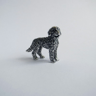 Little labradoodle miniature in silver