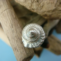 Mini shell stud earrings, fine silver