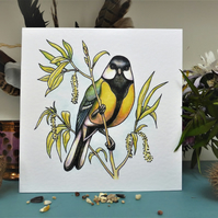 Great Tit greetings cards, garden birds