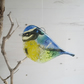 Blue Tit Garden Bird Side View - Fused Glass Hanging - Sun Catcher - Gift