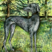 The Forest of Echoes - Deerhound