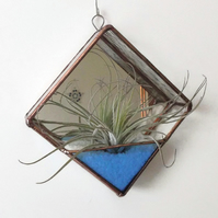 Glass Air Plant Terrarium, Air Plant Holder