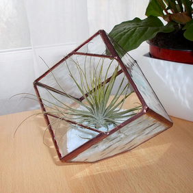 Glass Air Plant Terrarium, Terrarium Kit - MADE TO ORDER