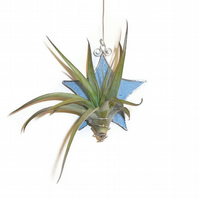 Stained Glass Star Air Plant Holder, Light Blue Stained Glass Plant Holder