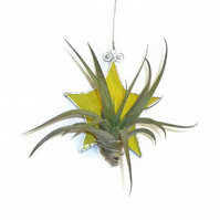 Stained Glass Star Air Plant Holder, Yellow Stained Glass Plant Holder