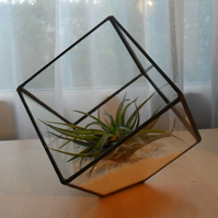 Glass Air Plant Terrarium, Medium Cube Air Plant Terrarium Kit - MADE TO ORDER