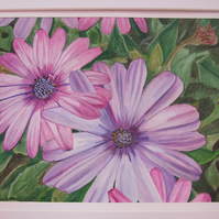Pink & Purple Asters Original Watercolour Painting Ink on Paper with Mount