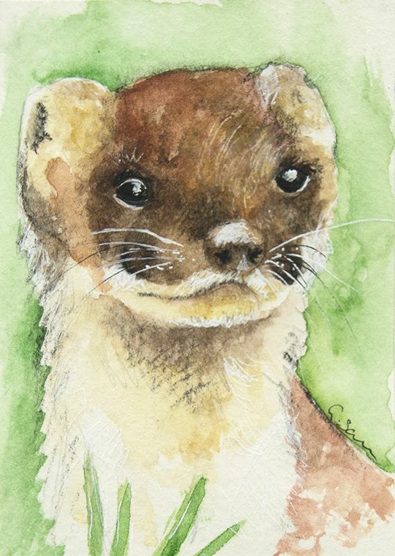 ORIGINAL ACEO No. 3 'Stoat' Mixed Media Watercolor and Charcoal Painting