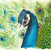 Limited Edition A4 Art Print 'Indian Blue' Peacock Illustration Painting