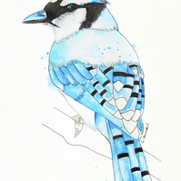Limited Edition A4 Art Print 'Blue Jay' Bird Illustration Painting