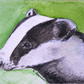 ORIGINAL ACEO No. 15 'Badger' Mixed Media Watercolor and Charcoal Painting