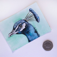 ORIGINAL ACEO No.27 'Royal Peacock' Wildlife Watercolor & Charcoal Painting