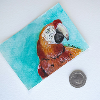 ORIGINAL ACEO No.35 'Red Parrot' Wildlife Watercolor & Charcoal Painting