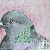 ORIGINAL ACEO No.40 'Pigeon' Wildlife Watercolor & Charcoal Painting