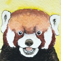 ORIGINAL ACEO No.48 'Red Panda' Wildlife Watercolor & Charcoal Painting