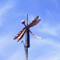Copper dragonfly on a Bullrush