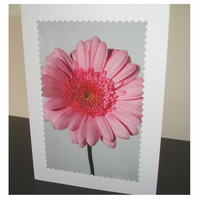 3 x Cards Baby Pink Gerbera Flower Blank Floral Notelets Pack of
