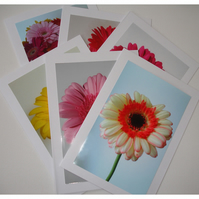 Pack of 6 Cards Notelets Pink Gerbera Flower Blank Six