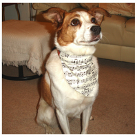Dog Bandana Over The Collar Scarf Musical Notes