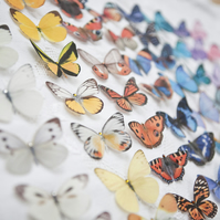Silk Butterfly hair clips with Swarovski Crystal - Choose any 5.
