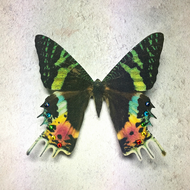 Silk Madagascan Sunset Moth hair clip with a rainbow Swarovski Crystals.