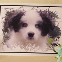 Border Collie Puppy Greeting Card