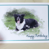 Border Collie Greeting Card - Troy