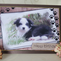 Border Collie Puppy Birthday Card