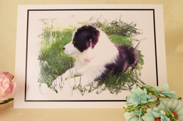 Border Collie Pup Card