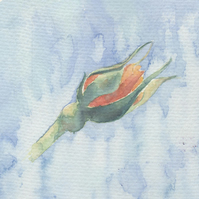 Rose Bud Original Watercolour  Painting OOAK