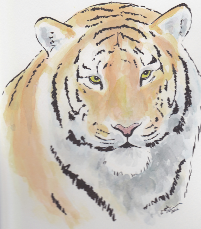 Regal Tiger Original Watercolour & Ink Painting OOAK