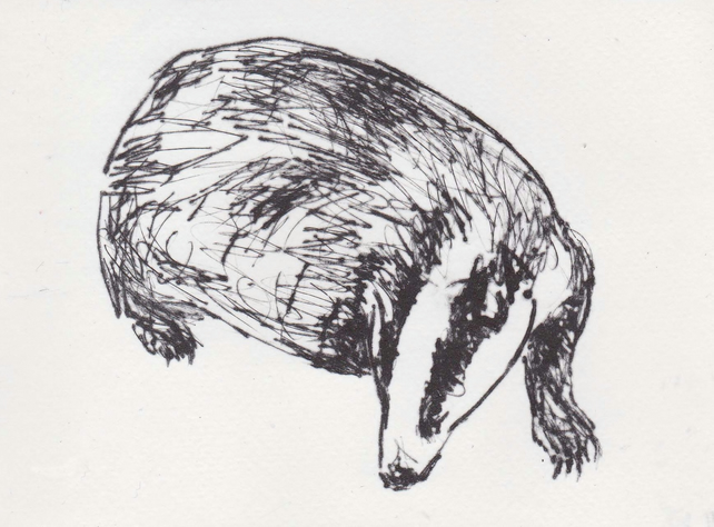 Badger Limited Edition Original Hand-Pulled Drypoint Print Animal Art