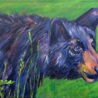 Animal Art Black Bear Original Oil Painting on Canvas OOAK