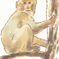 ACEO Animal Art Barbary Macaque Original Watercolour and Ink Painting OOAK