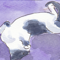 ACEO Animal Art Cat Relax Original Watercolour and Ink Painting OOAK Cat