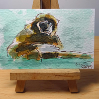 ACEO Animal Art Gibbon Sit Original Watercolour and Ink Painting OOAK Monkey