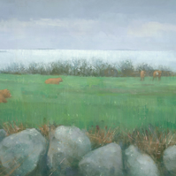 Tresco Cows,  Fine Art Print 21x8 inches