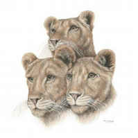 Lion Cubs Fine Art Print