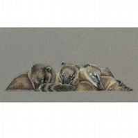 Coati Cuddle Fine Art Print