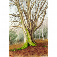 Winter Beech Tree Fine Art Print