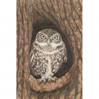 Little Owl Original Coloured Pencil Drawing