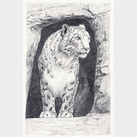 Snow Leopard in Cave - Original Pencil Drawing