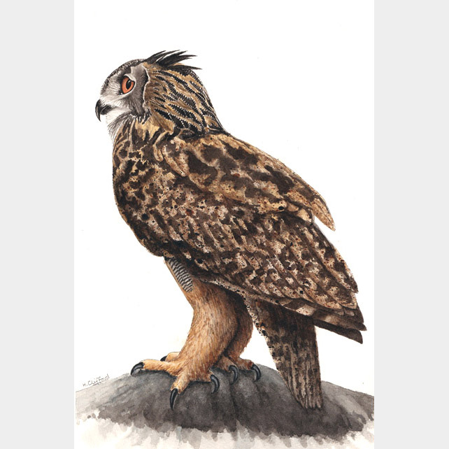 Eagle Owl - Original Watercolour Painting