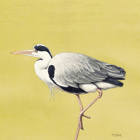 Stalking Heron - Original Watercolour Painting